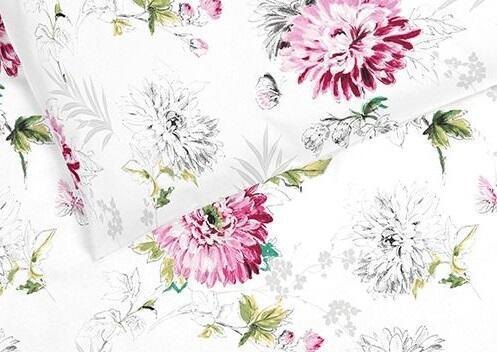 Chrazanténa růžové